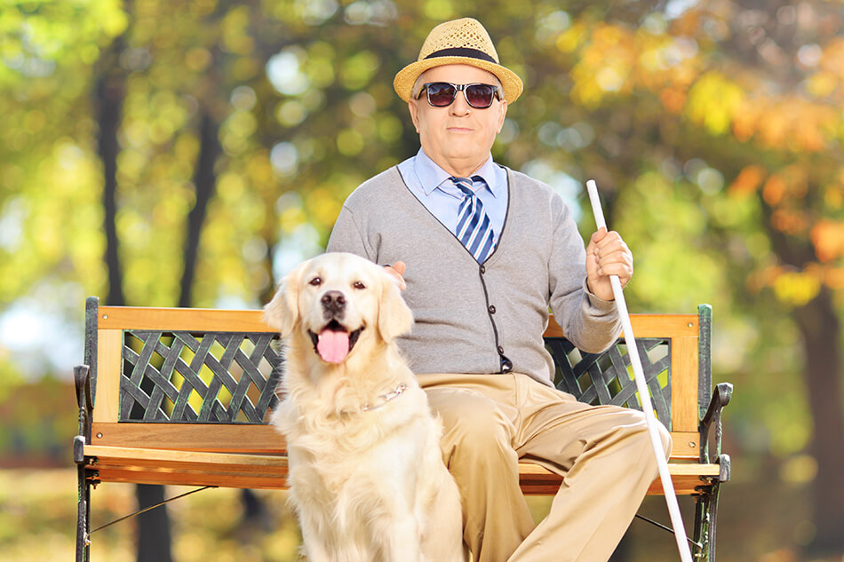 blind man on park bench with guide dog