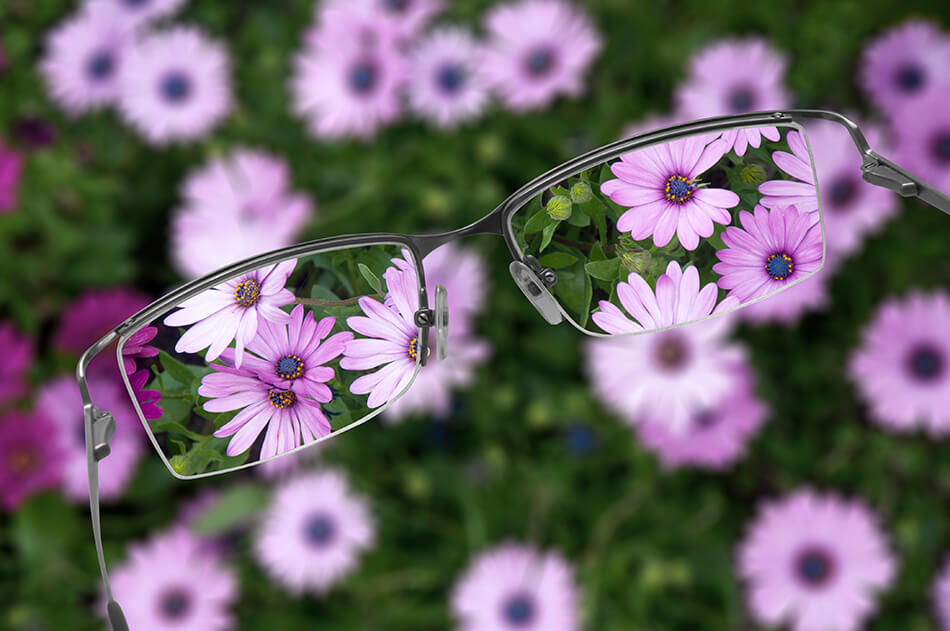 a bird's eye view of purple flowers through the lenses of a pair of glasses