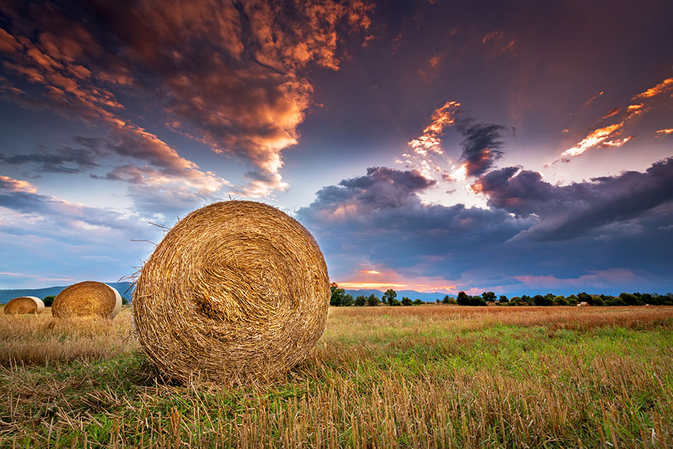 hay field with sunset