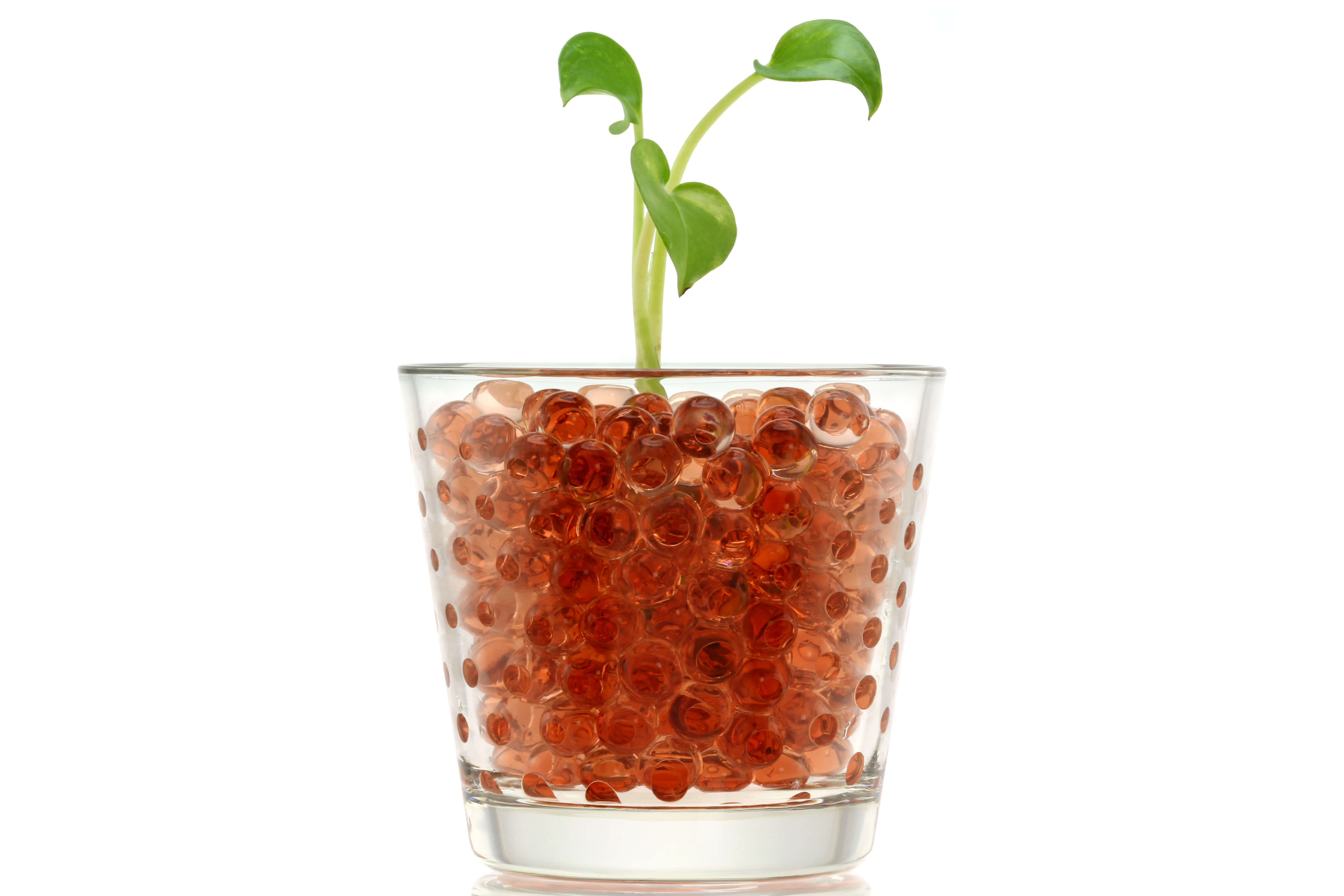 plant being watered by hydrogel beads